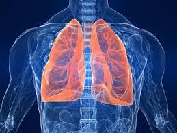 L'efficacia del Ganoderma lucidum nei confronti della bronchite