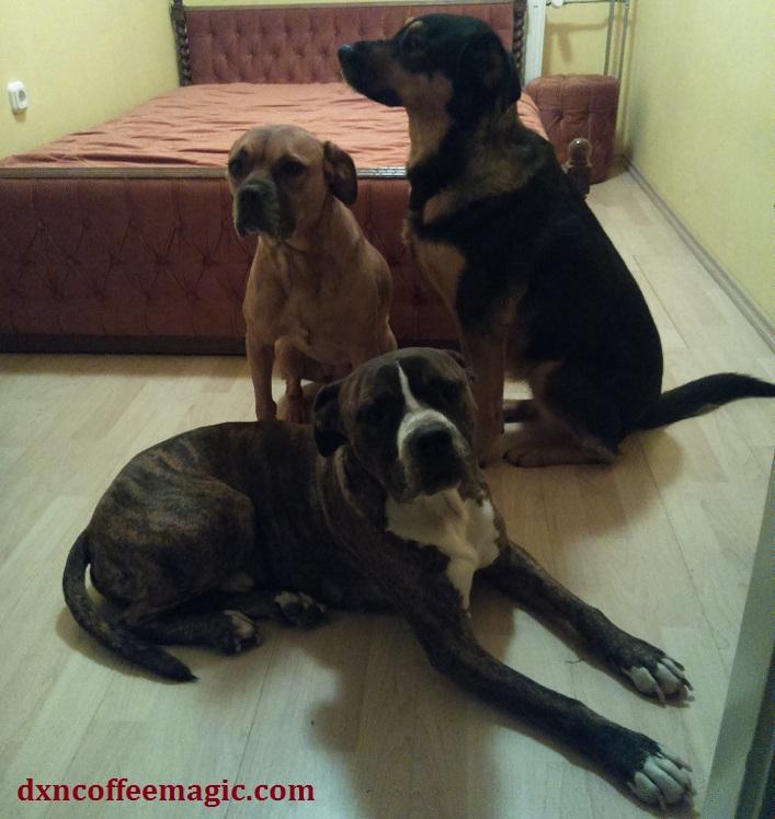 Beki, Bubu, Mézi, my pack <3