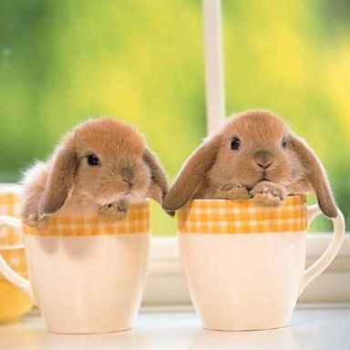 Happy Easter www.dxn-coffeeshop.com