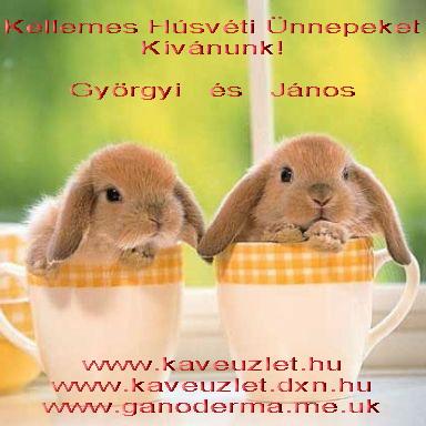 Kellemes Húsvéti Ünnepeket! Happy Easter! www.kaveuzlet.hu