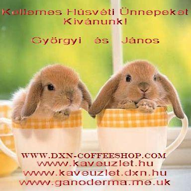 Kellemes Húsvéti Ünnepeket www.kaveuzlet.hu