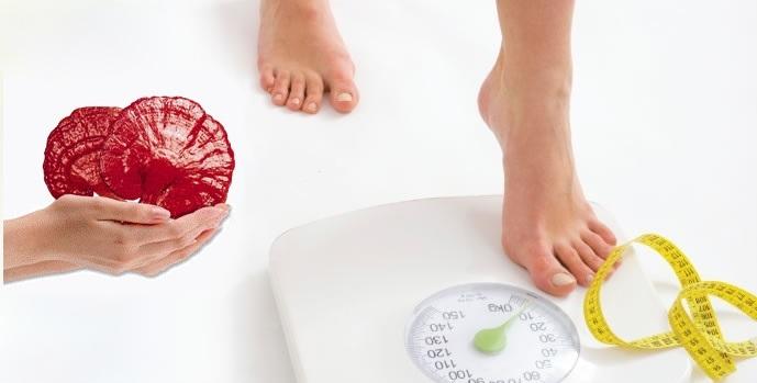ganoderma licidum for weight loss