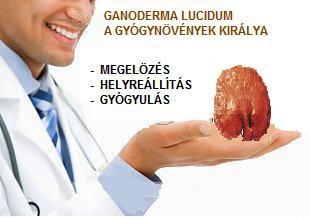 Ganoderma gomba