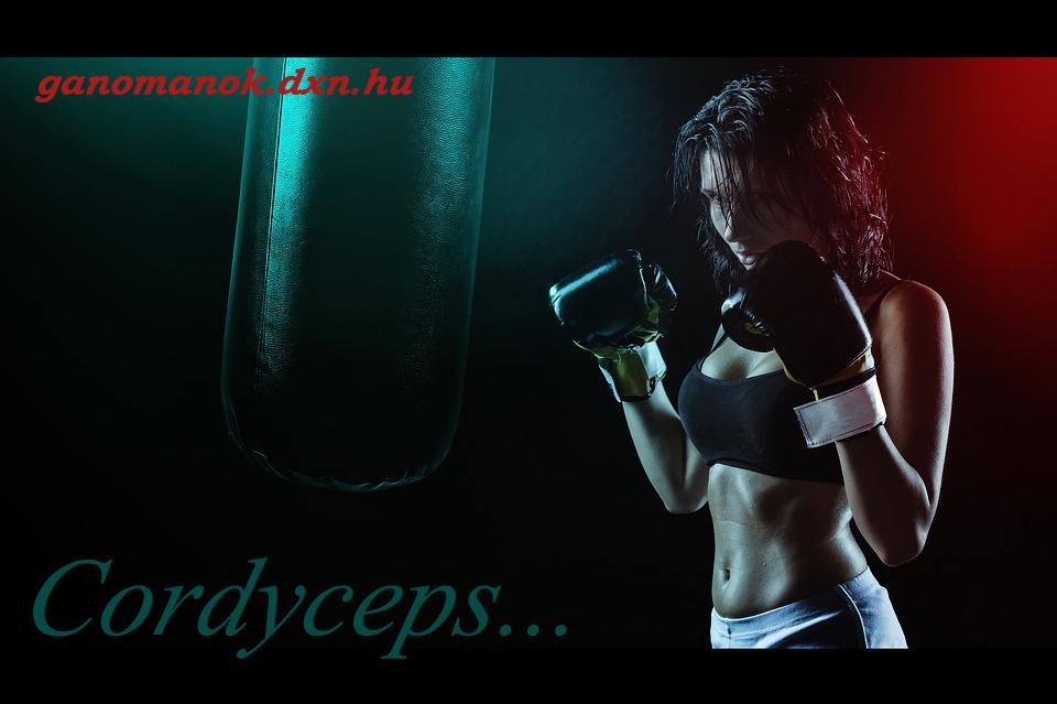 Cordyceps - a legális teljesítménynövelő