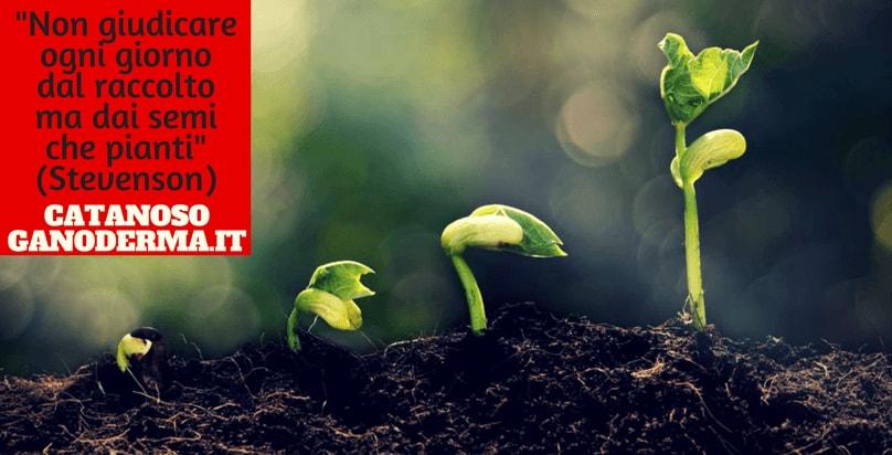 Fungo Orientale Ganoderma Lucidum Reishi DXN biologico benefici proprietà dimagrimento