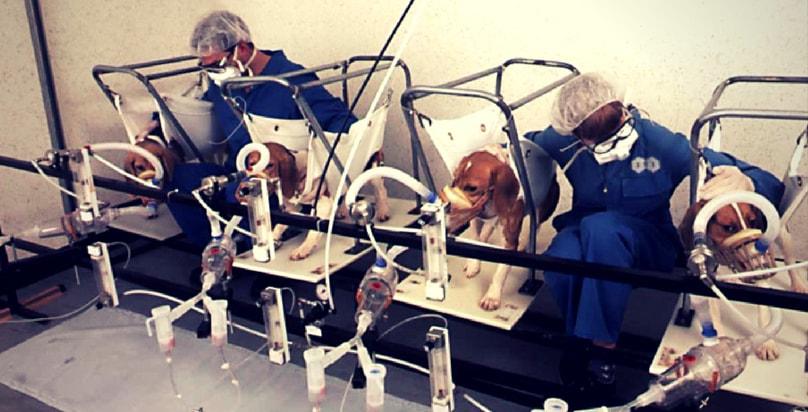 Vivisezione esperimenti fumo e danni di sigaretta animali laboratori